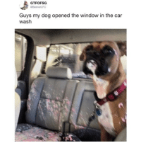 Memes, Good, and Boy: GTFOFSG  Guys my dog opened the window in the car  wash Still a good boy