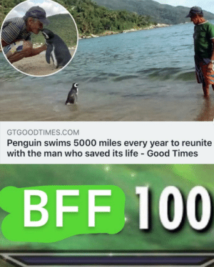 Find you someone like this little dude via /r/memes http://bit.ly/2VA5nqu: GTGOODTIMES.COM  Penguin swims 5000 miles every year to reunite  with the man who saved its life - Good Times  BFF 100 Find you someone like this little dude via /r/memes http://bit.ly/2VA5nqu