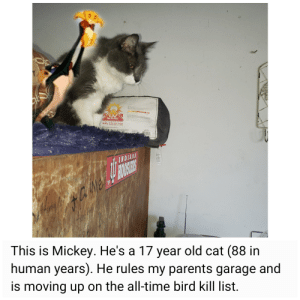 My parents cat ruling over everything the light touches (in the garage): GUARD  50+ pR OTCTIO  TTEAR  INDIANA  BOCSER  CAMeE  This is Mickey. He's a 17 year old cat (88 in  human years). He rules my parents garage and  is moving up on the all-time bird kill list. My parents cat ruling over everything the light touches (in the garage)