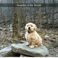 Memes, Ted, and Guardian: Guardian of the Woods @hilarious.ted posts the best animal memes ❤️