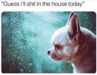 """Shit, Guess, and House: """"Guess ill shit in the house today"""""""