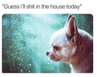 "Funny, Logic, and Shit: ""Guess i'll shit in the house today"" Dog Logic. https://t.co/9xWdZ6kuU5"