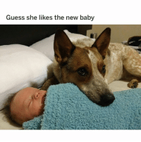 (@hilarious.ted) is the BEST animal meme page on IG! - (Pic: Reddit u-tstusrplzignore): Guess she likes the new baby (@hilarious.ted) is the BEST animal meme page on IG! - (Pic: Reddit u-tstusrplzignore)