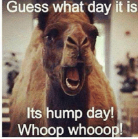 guess what day it is: Guess what day it is  Its hump day!  Whoop whooop!