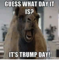 MR: GUESS WHAT DAY IT  IS?  IT'S TRUMP DAY! MR