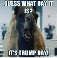 TRUMP! PC: @tanmanfilm 🔴🔵Want to see more? Check out my YouTube channel: Dylan's Daily Show🔵🔴 JOINT INSTAGRAM: @rightwingsavages Partners: 🇺🇸👍: @The_Typical_Liberal 🇺🇸💪@tomorrowsconservatives 🇺🇸 @DylansDailyShow 🇺🇸@conservative.female 😈 @too_savage_for_liberals 💪 @RightWingRoast 🇺🇸 @Conservative.American 🇺🇸 @Trumpmemz DonaldTrump Trump HillaryClinton MakeAmericaGreatAgain Conservative Republican Liberal Democrat Ccw247 MAGA Politics LiberalLogic Savage TooSavageForDemocrats Instagram Merica America PresidentTrump Funny True sotrue: GUESS WHAT DAY IT  IS?  ITS TRUMP DAY!  net TRUMP! PC: @tanmanfilm 🔴🔵Want to see more? Check out my YouTube channel: Dylan's Daily Show🔵🔴 JOINT INSTAGRAM: @rightwingsavages Partners: 🇺🇸👍: @The_Typical_Liberal 🇺🇸💪@tomorrowsconservatives 🇺🇸 @DylansDailyShow 🇺🇸@conservative.female 😈 @too_savage_for_liberals 💪 @RightWingRoast 🇺🇸 @Conservative.American 🇺🇸 @Trumpmemz DonaldTrump Trump HillaryClinton MakeAmericaGreatAgain Conservative Republican Liberal Democrat Ccw247 MAGA Politics LiberalLogic Savage TooSavageForDemocrats Instagram Merica America PresidentTrump Funny True sotrue