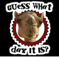 WHAT DAY IS IT ???: GUESS WHat  daY, It is? WHAT DAY IS IT ???