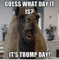 MIke Mike mike mike mike.... What a beautiful day it is today. ~cornman  #TrumpWinsCanWeStillBeFriends: GUESS WHAT DAY IT  ISP  IT'S TRUMP DAY! MIke Mike mike mike mike.... What a beautiful day it is today. ~cornman  #TrumpWinsCanWeStillBeFriends