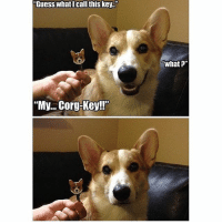 "YESSS i love this corgi 😂🐶, smash that like button for this amazing pun 🤗♥️: ""Guess what I call this key.""  ""My... Corg-Key!""  What?"" YESSS i love this corgi 😂🐶, smash that like button for this amazing pun 🤗♥️"