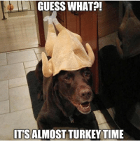 turkey time: GUESS WHAT  ITS ALMOST TURKEY TIME