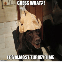 Almost!: GUESS WHAT?!  ITS ALMOST TURKEY TIME  img flip com Almost!