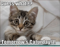 mine favorite day :D: Guess what  Tomorrow's Caturday!T!  CANHASCHEEZEURGER.coM mine favorite day :D