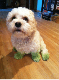 """""""Guess who's been running around in the grass..."""" https://t.co/2TTud48sw0: """"Guess who's been running around in the grass..."""" https://t.co/2TTud48sw0"""