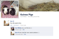 ken m: Guinea Pigs  16,579 likes 700 talking about this  Ken M  they like apple slices  Like Comment 7 hours ago  Jen Milicia yes, yes then do :)  4 hours ago Like  Ken M they look like hairy baked potatoes:)  2 seconds ago Like