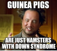 Not a very smart animal: GUINEA PIGS  ARE JUST HAMSTERS  WITH DOWN SYNDROME Not a very smart animal
