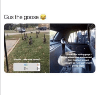 Look what you've done!: Gus the goose  Thanks for voting guysi  grabbed one and named  him Gus but we got  caught so now were both  going to jail  Should I take one home?  YES  N0 Look what you've done!