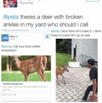 Theres a Deer With Broken Ankles in My Yard Who Should I Call in