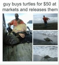 Turtles, Them, and Thing: guy buys turtles for $50 at  markets and releases them <p>Doing the right thing !</p>