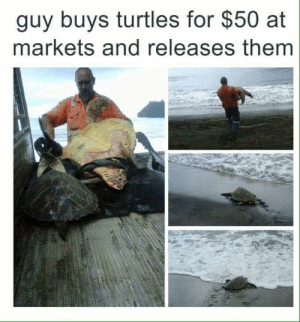 Turtles, Them, and Thing: guy buys turtles for $50 at  markets and releases them Doing the right thing !
