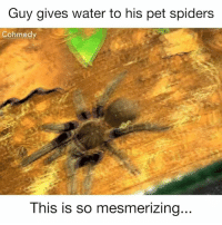 😲: Guy gives water to his pet spiders  Cohmedy  This is so mesmerizing.. 😲