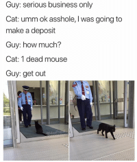 Funny, Business, and Mouse: Guy: serious business only  Cat: umm ok asshole, l was going to  make a deposit  Guy: how much?  Cat: 1 dead mouse  Guy: get out  MasiPop I took a story poll yesterday and 46% of u said not to post this but u can't let the haters win 👏🔥👌🏼💯💯👏👏