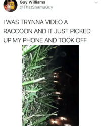 Memes, Phone, and Shit: Guy Williams  @ThatShamuGuy  IWAS TRYNNA VIDEO A  RACCOON AND IT JUST PICKED  UP MY PHONE AND TOOK OFF Whole Lotta gang shit 😂😂💀💀💀💀💀