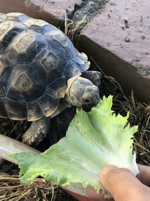 Arrow, French, and Asking: Guys I found a tortoise. I gave it some lettuce but it speaks French and keeps asking me about an arrow that's stands or something