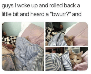 """Goat, Back, and Cat: guys I woke up and rolled back a  ittle bit and heard a """"bwurr?"""" and This cat is the GOAT"""