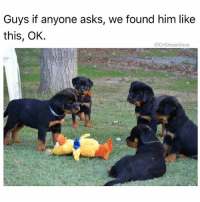 Memes, Asks, and 🤖: Guys if anyone asks, we found him like  this, OK.  @DrSmashlove SNITCHES GET BISCUITS (doggie biscuits ☺️...I'm stupid...ignore me please 🤗) 😂😂😂