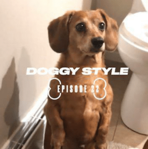Dank, 🤖, and Dog: GY STYLE  EPISODE 22 Is there a better breed of dog than dachshunds? 🐶🌭