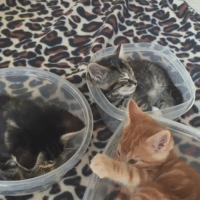Dank, Kittens, and Tupperware: H Just some kittens in Tupperware.