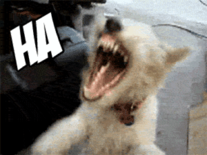 19 Very Funny Dog Laughing Meme That Make You Laugh | MemesBoy: HA 19 Very Funny Dog Laughing Meme That Make You Laugh | MemesBoy