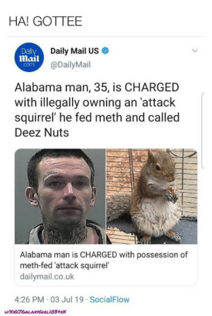 Deez Nuts: HA! GOTTEE  Daily Mail US  Daily  mail@DailyMail  com  Alabama man, 35, is CHARGED  with illegally owning an 'attack  squirrel' he fed meth and called  Deez Nuts  Alabama man is CHARGED with possession of  meth-fed 'attack squirrel  dailymail.co.uk  4:26 PM 03 Jul 19 SocialFlow  UXxDJGALAXYGIRLIOSYxx
