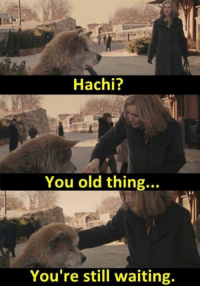 Still Waiting: Hachi?  You old thing..  You're still waiting.