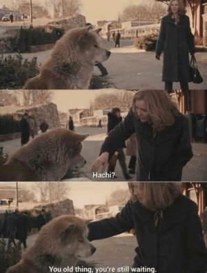 Today, Old, and Never: Hachi?  You old thing, you're still waiting I never understood that refernce Until today, right in the feels!