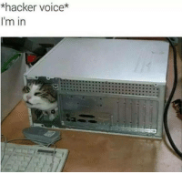 Voice, Another, and Rare: *hacker voice*  I'm in Another rare picture of people from r/hacking