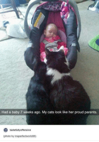Baby, It's Cold Outside, Cats, and Parents: Had a baby 7 weeks ago. My cats look like her proud parents.  to  tastefully offensive  (photo by inaperfectworld88)