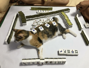 Had a family mahjong game last night and my cat decided to just casually sit in the playing area: Had a family mahjong game last night and my cat decided to just casually sit in the playing area