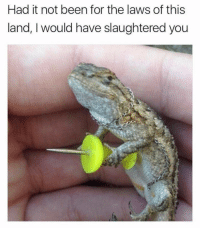 Been, You, and For: Had it not been for the laws of this  land, I would have slaughtered you