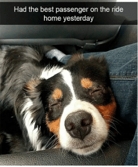 Memes, Animal, and Best: Had the best passenger on the ride  home yesterday Animal Memes Guaranteed To Make You Laugh Every Time - 20