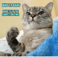For more original funny cat memes made by our users visit our LOLCATS: http://icanhas.cheezburger.com/lolcats: HAD TO BAR  MADEITTOTHE  CARPETONTIME For more original funny cat memes made by our users visit our LOLCATS: http://icanhas.cheezburger.com/lolcats
