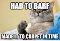 Every. Single. Time.: HAD TO BARF  MADEITTO CARPET IN TIME Every. Single. Time.