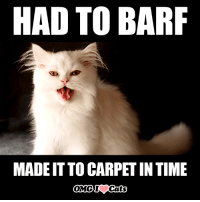 barf: HAD TO BARF  MADEITTOCARPETIN TIME  OMG Cats