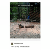 Tumblr, Trendy, and Dog: Had to take a double take  babyanimalgifs tumblr.com/  babyanimalgifs  The Log Dog. (via hazardnipt) fcuk i really can't talk about ppl on here bc everyone follows me or knows my account