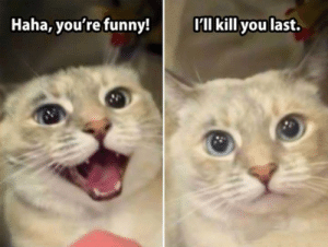 Funny, Haha, and You: Haha, you're funny!  l kill you last.