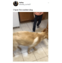 Saturday night plans 💃 watch this @thebasicbitchlife 😂 (@hailey_curtis07 on Twitter): Hailey  @hailey_curtis07  I have the coolest dog Saturday night plans 💃 watch this @thebasicbitchlife 😂 (@hailey_curtis07 on Twitter)