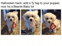 Baby, It's Cold Outside, Halloween, and Lol: Halloween hack: add a Ty tag to your pupper,  now he a Beanie Baby lol  @Drsmashlove
