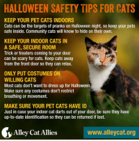 Check out these tips to keep your cat safe this Halloween!: HALLOWEEN SAFETY TIPS FOR CATS  KEEP YOUR PET CATS INDOORS  Cats can be the targets of pranks on Halloween night, so keep your pets  safe inside. Community cats will know to hide on their own.  KEEP YOUR INDOOR CATS IN  A SAFE, SECURE ROOM  Trick or treaters coming to your door  can be scary for cats. Keep cats away  from the front door so they can relax.  ONLY PUT COSTUMES ON  WILLING CATS  Most cats don't want to dress up for Halloween.  Make sure any costumes don't restrict  breathing or movement.  MAKE SURE YOUR PET CATS HAVE ID  Just in case your indoor cat darts out of your door, be sure they have  up-to-date identification so they can be returned if lost.  Alley Cat Allies  www.alleycat.org Check out these tips to keep your cat safe this Halloween!