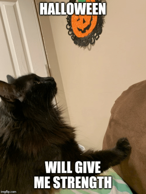 Cats, Friends, and Halloween: HALLOWEEN  WILL GIVE  ME STRENGTH  imgflip.com Friends black cat
