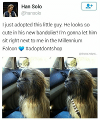 "Beautiful, Cute, and Han Solo: Han Solo  @hansolo  I just adopted this little guy. He looks so  cute in his new bandolier! I'm gonna let him  sit right next to me in the Millennium  Falcon #adoptdontshop  @chaos.reigns <p>This looks like the beginning of a beautiful friendship&hellip; via /r/wholesomememes <a href=""https://ift.tt/2K2YIQ8"">https://ift.tt/2K2YIQ8</a></p>"